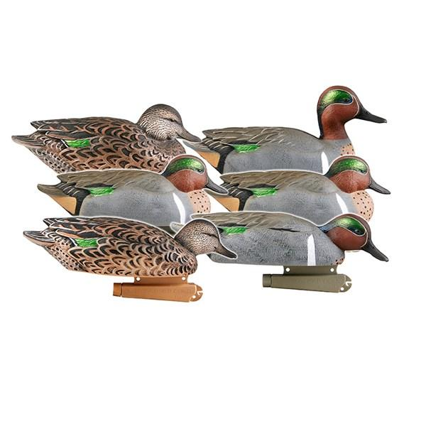 PG GREEN- WINGED TEAL
