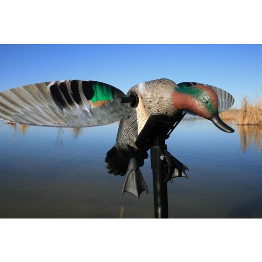 MOJO ELITE SERIES GREEN WING TEAL (CERCETA)