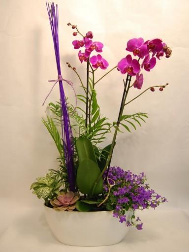 Planta natural con Orquídeas
