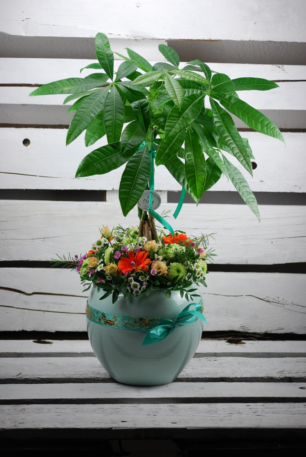 Composición Planta natural en cerámica Mint