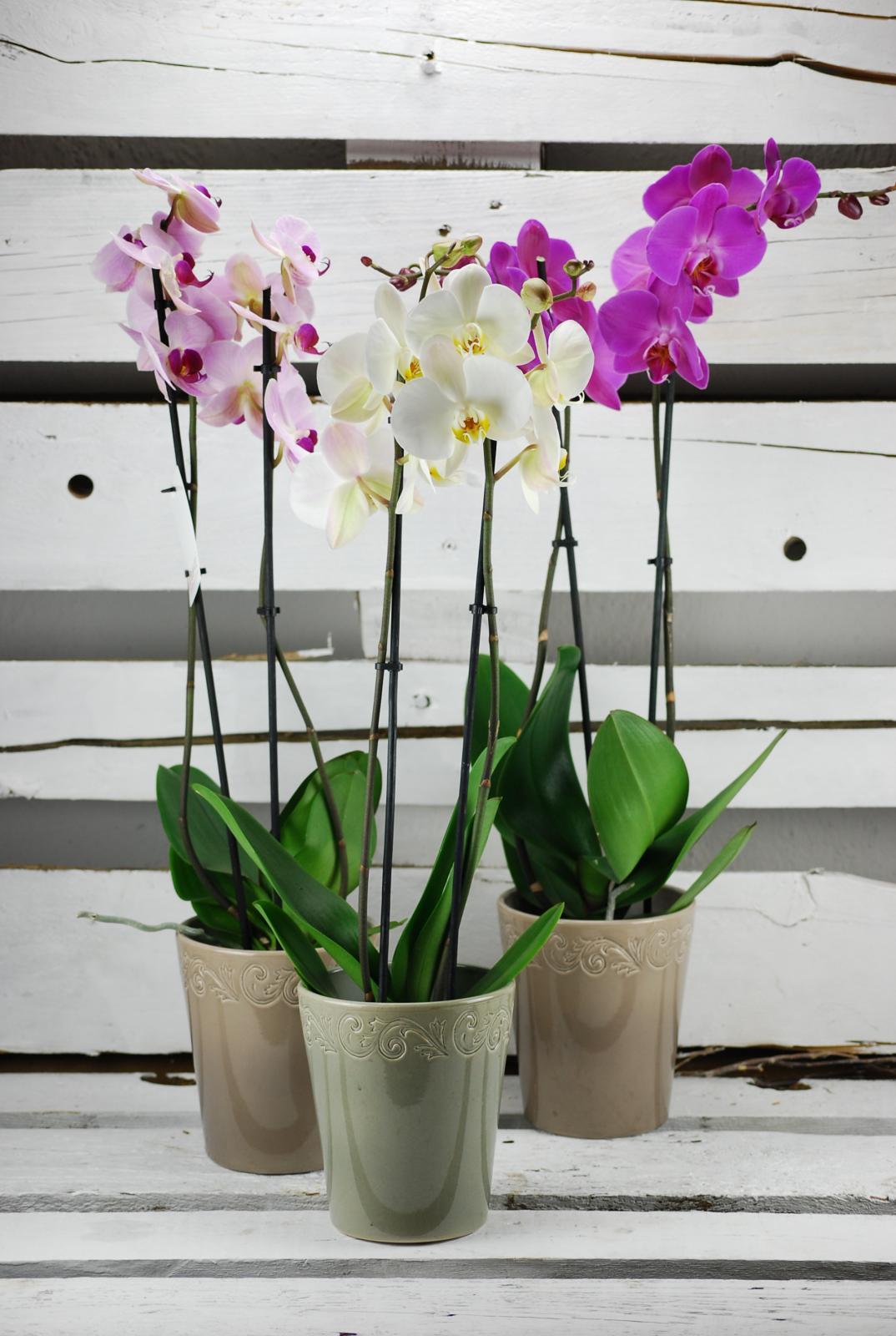 Orquídea en cerámica