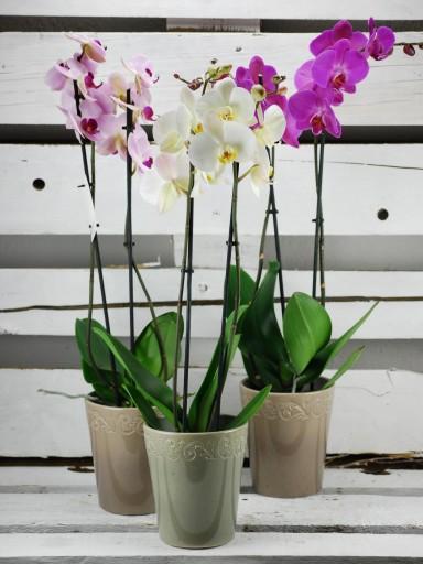 Orquídea en cerámica [0]