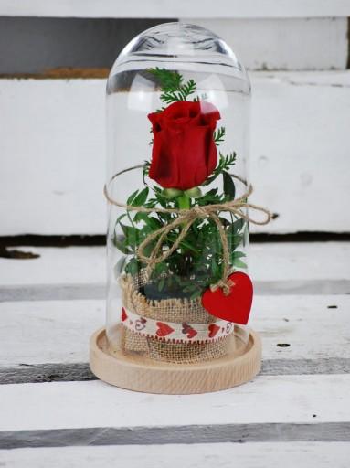 Rosa preservada o eterna en Campana de cristal