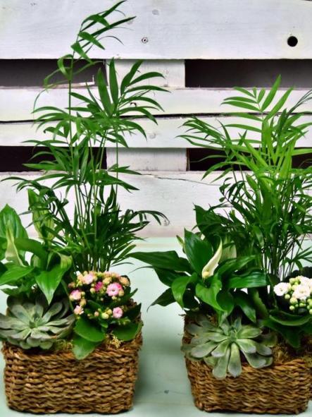 Cesta Estilo Rústico, con planta de interior, de fácil cuidado. [1]