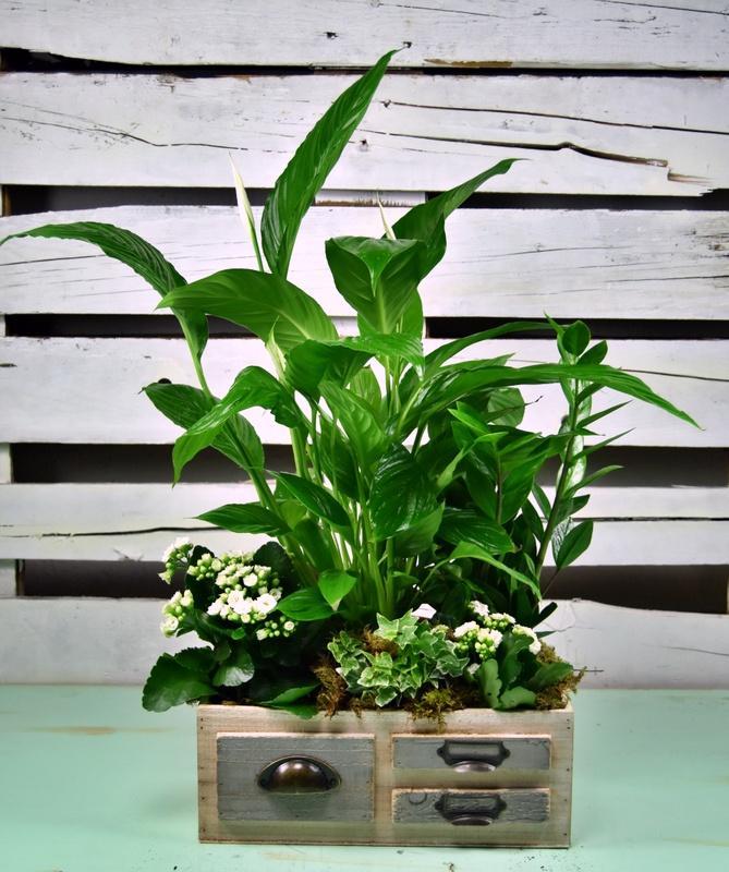 Vegetación en verdes y blancos
