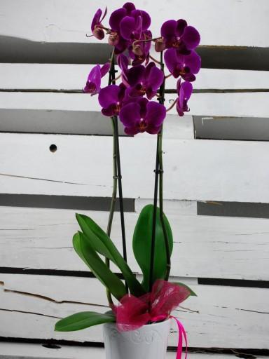 Orquídea en cerámica [1]