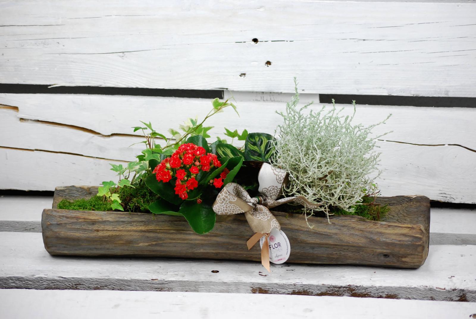 Composición vegetal sobre tronco de madera natural