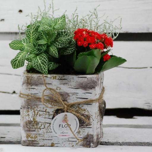 Cerámica estilo nórdico en madera de abedul con planta natural