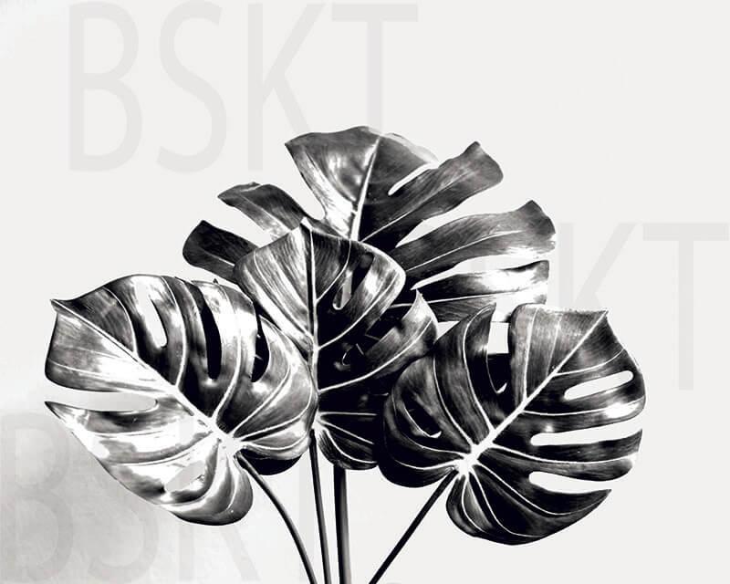 Cuadro en lienzo alta resolución botánica Monstera Blanco y Negro