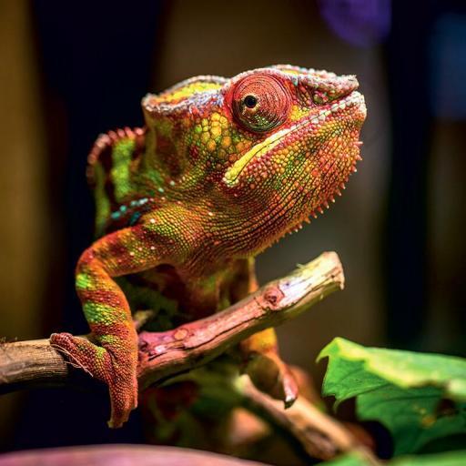 Cuadro en lienzo tamaño grande cuadrado Iguana
