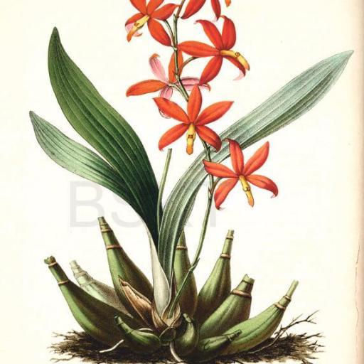 Cuadro en lienzo de inspiración botánica para salón