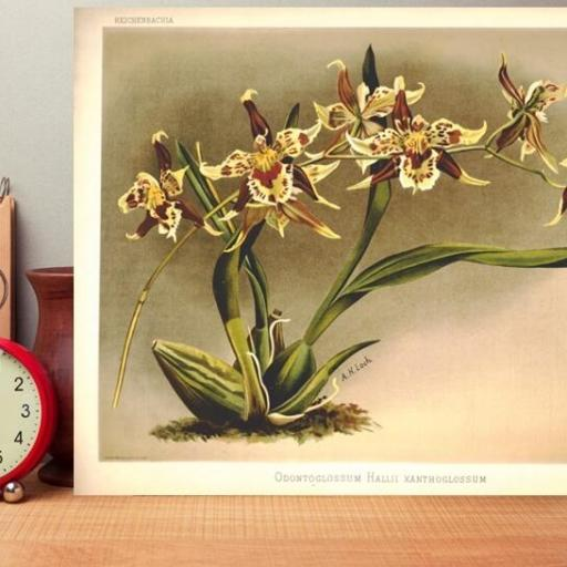Cuadro en lienzo plantas floreciendo vintage lámina [1]