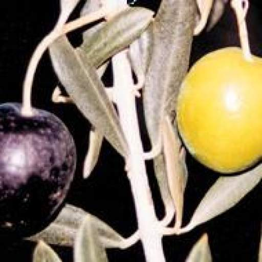 Olivo Manzanilla [1]