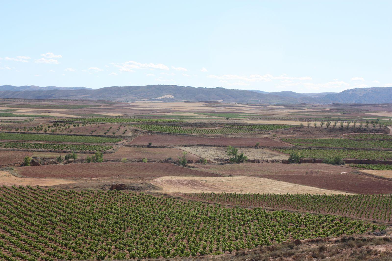 Viñedo - Vineyard CALATAYUD(1).jpg