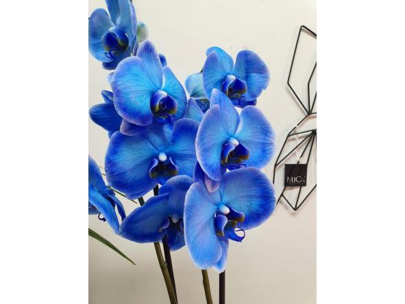 Orquidea Phalaenopsis azul  [1]