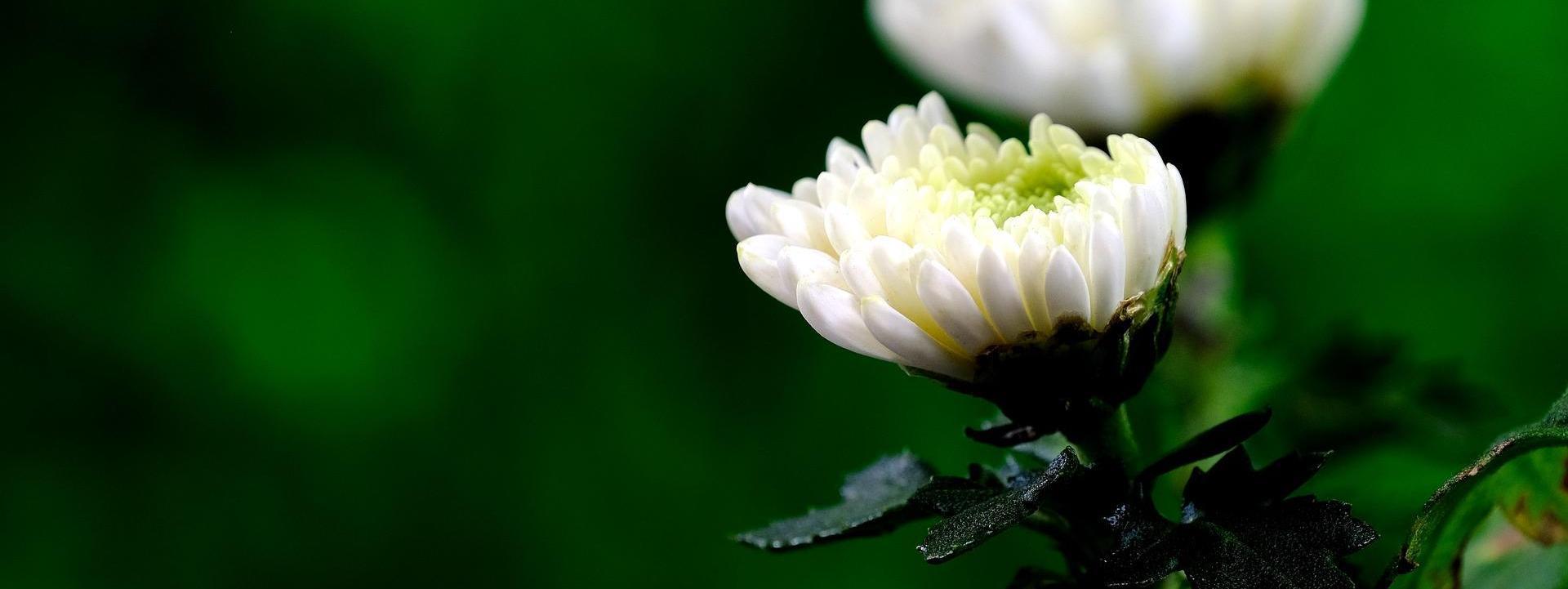 5 Plantas perfectas para tu jardín en otoño