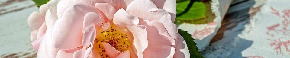 Uñas de porcelana. Acrílico | Distrito Wellness Concept ~ Beauty ~ Nails