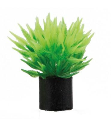 Planta Mini