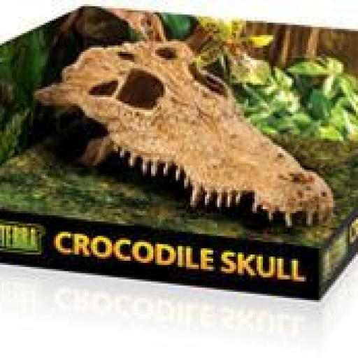 Crocodrile Skull, Exo Terra
