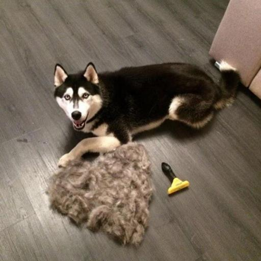 Cepillo para perro Furminator [3]