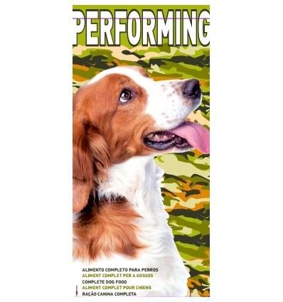 Performing perros Galito