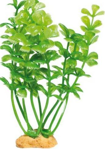 Magic Plants