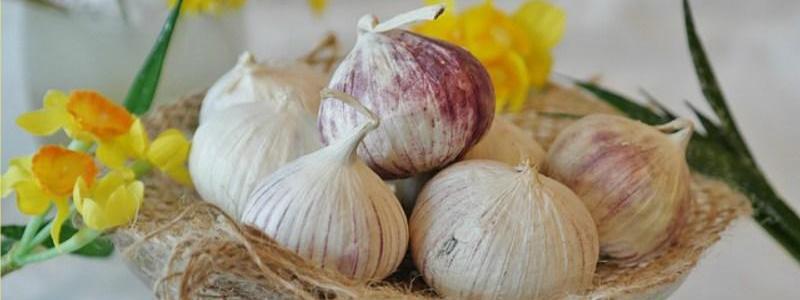 Bondades del ajo para la salud humana