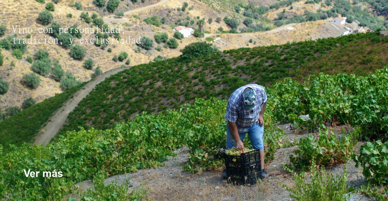 Vino español online - Spanishflavors