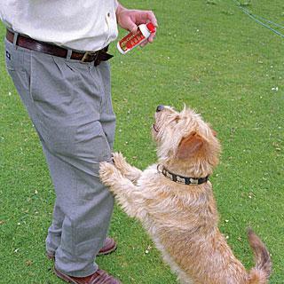 Spray para detener los malos comportamientos PET CORRECTOR