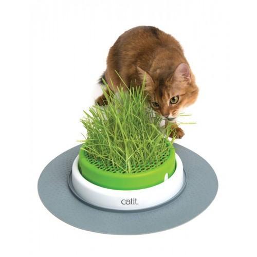 Germinador con hierba gatera SENSES