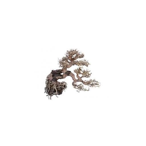 Bonsai de creciemiento lateral para aquascaping