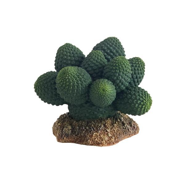 Cactus para terrarios ATACAMMA