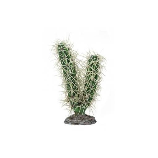 Cactus para terrarios SIMPSON