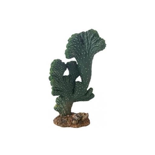 Cactus Victoria para terrarios