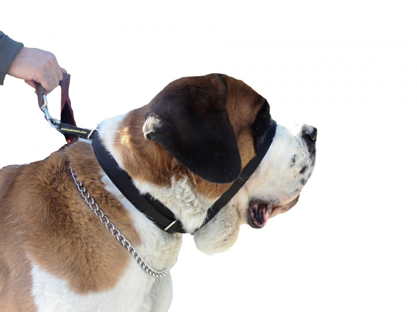 Collar para perros grandes que tiran CANNY COLLAR COLOSSUS