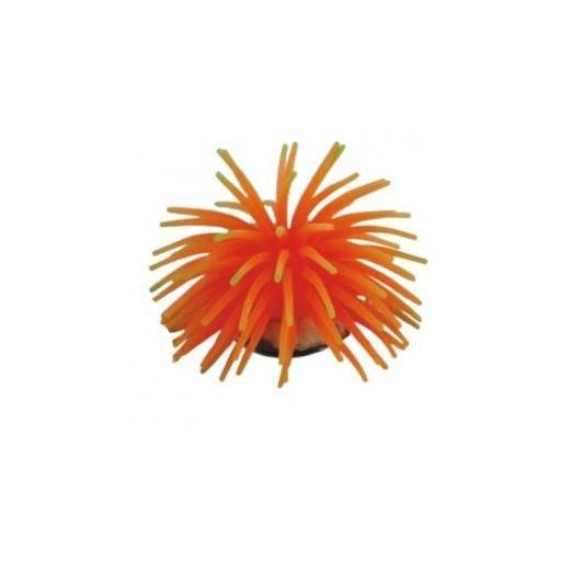 Anemona decorativa para acuarios