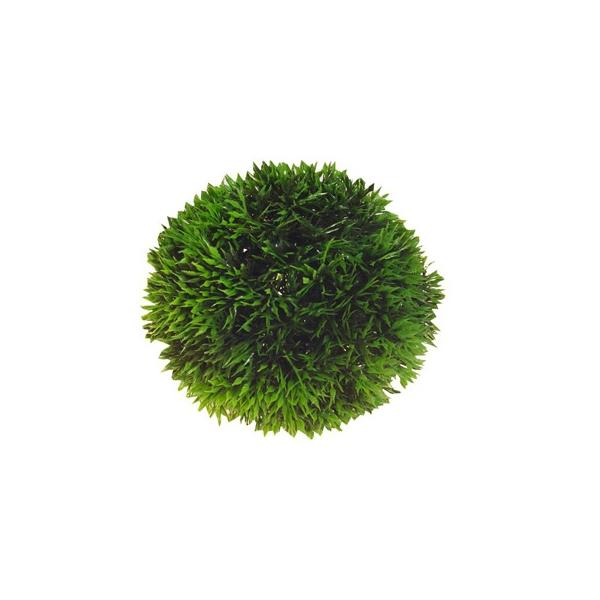 Planta para acuario de forma esférica PLANT BALL 9cms