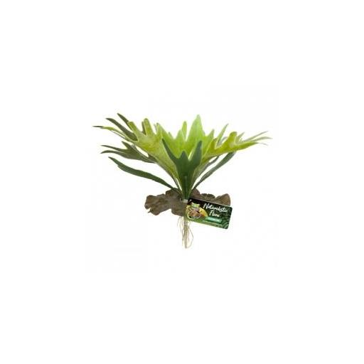 Planta decorativa para terrarios STAGHORN FERN de ZOOMED