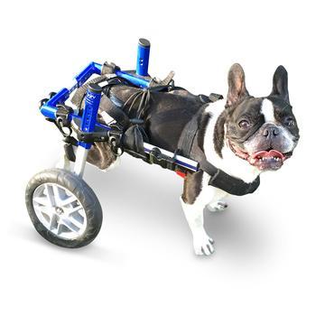 Silla de ruedas para perros con problemas de movilidad de las patas traseras
