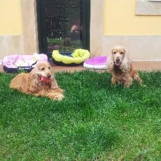 Guardería canina perros medianos. Cuidadora de perros en Gijón