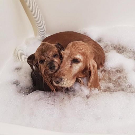 Baño con Tratamiento de Ozono en Spa [1]