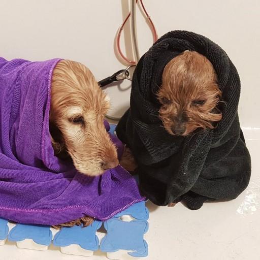 Baño con Tratamiento de Ozono en Spa [2]