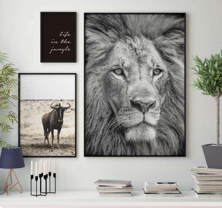 Composición Safari