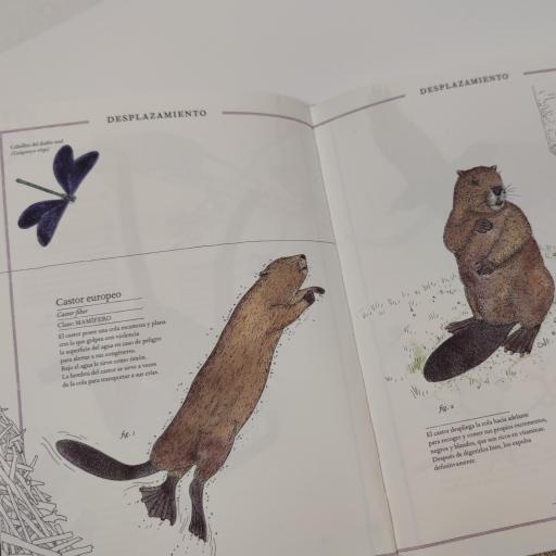 Inventario animales con cola [2]