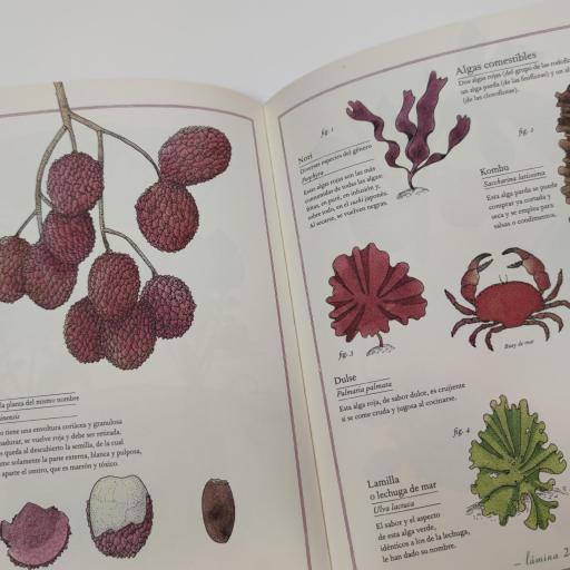 Inventario de frutas y verduras [2]