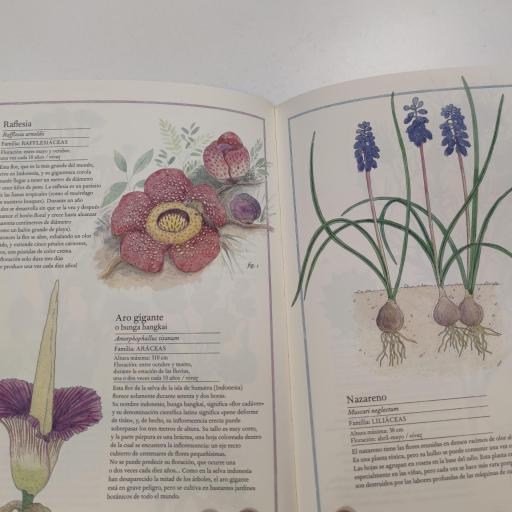 Inventario de flores [1]