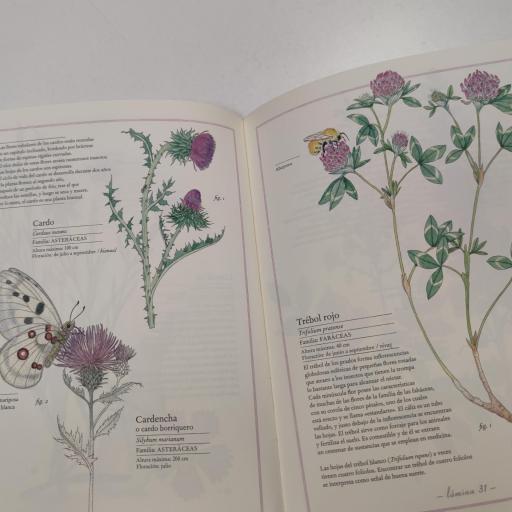 Inventario de flores [2]