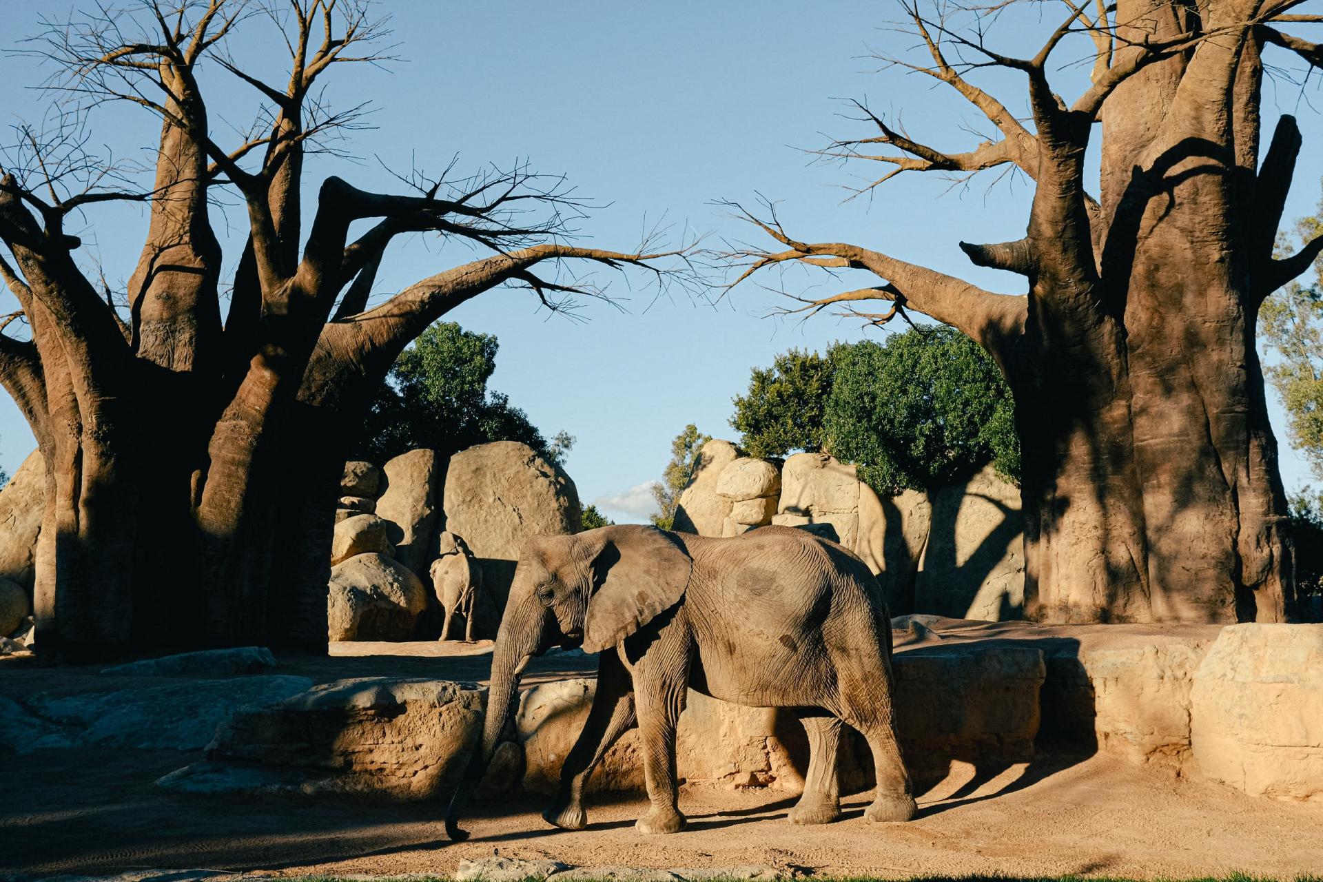 Propiedades del Baobab
