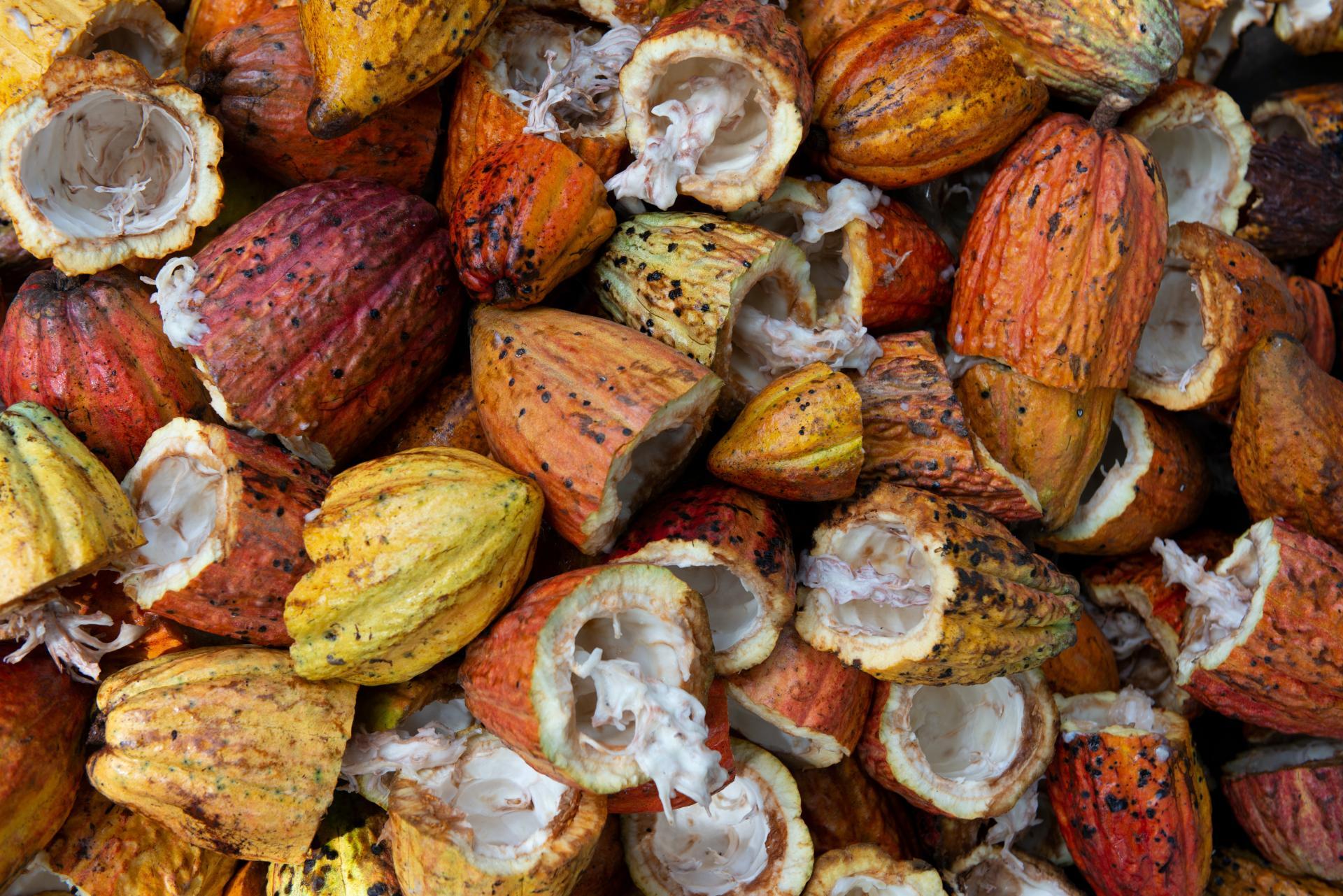 El uso del cacao dentro de la cosmética natural