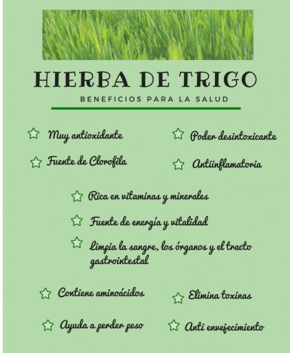 Hierba de trigo ecológica [3]